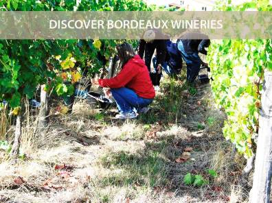 Discover Bordeaux Wineries