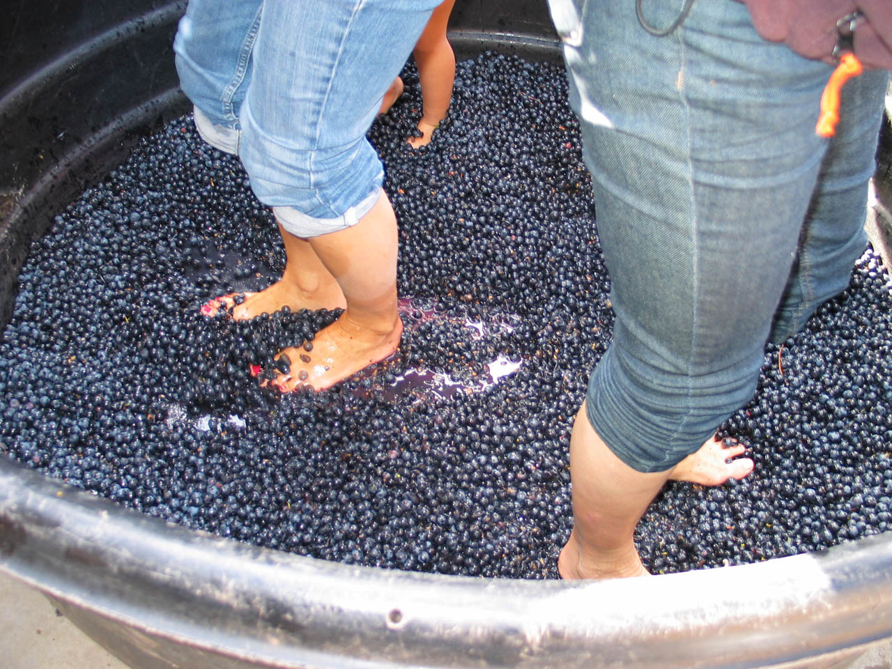 Bordeaux-vineyards-crushing-grapes